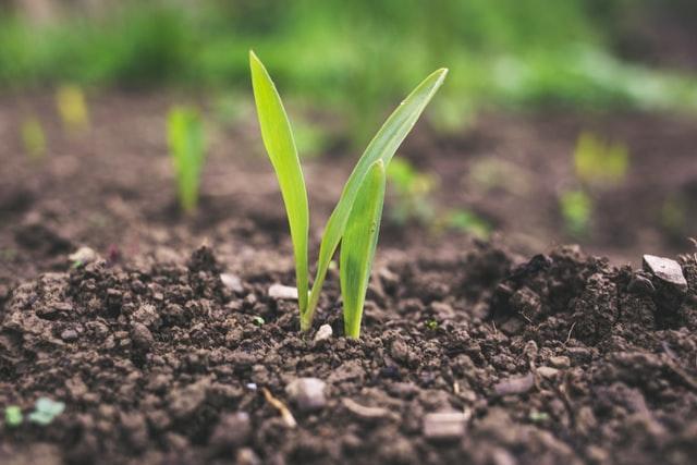 Dostępne na odpowiednich warunkach środki do ochrony roślin